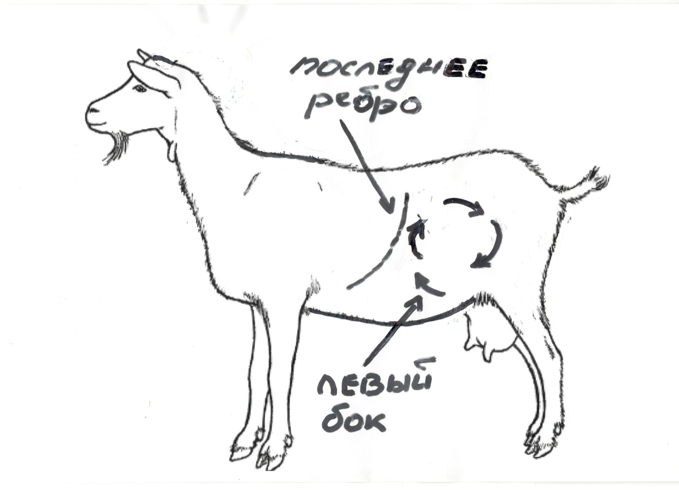Коза потеряла жвачку лечение народными средствами thumbnail